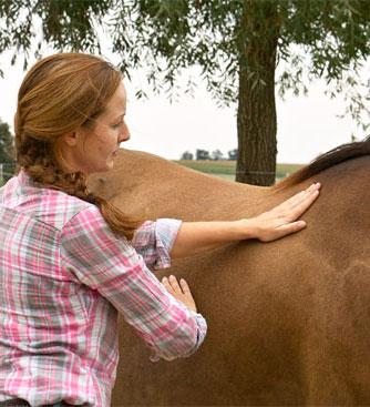 Foto Lymphdrainage beim Pferd