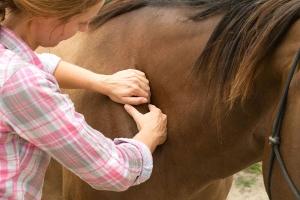 Foto Manuelle Therapie beim Pferd