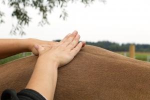 Foto Pferdephysiotherapie